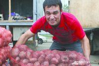 В Тюменской области сбор урожая картофеля идет с незначительным опозданием