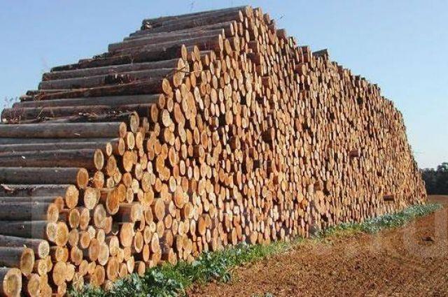 Рада частично разрешила вывоз леса из Украины по предложению Порошенко