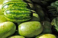 Самый большой в мире «херсонский» арбуз оказался фейком