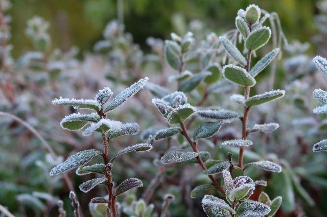 В ночь на понедельник температура в Прикамье понизится до 0…-2°.