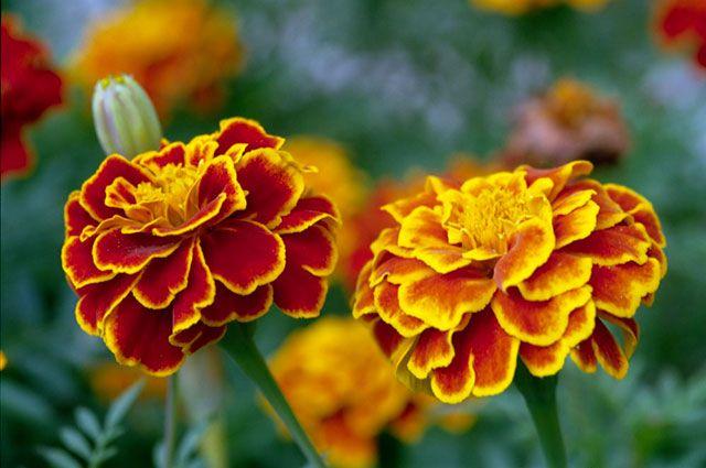 dostavka-tsvetov-florid-hatanga