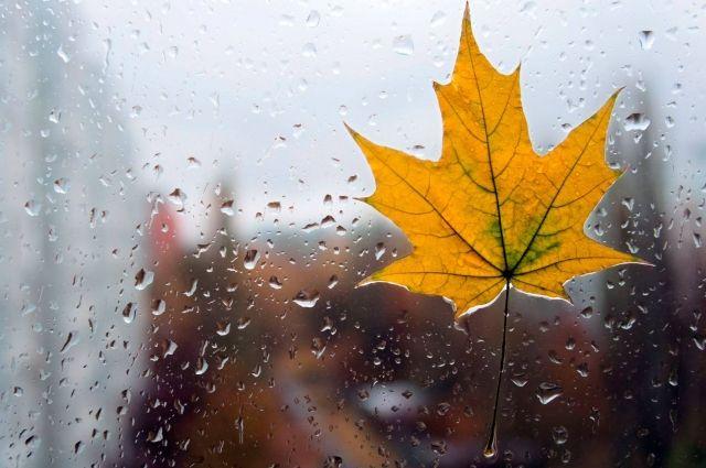 Дожди и грозы: синоптики поделились прогнозом погоды на сентябрь-2018