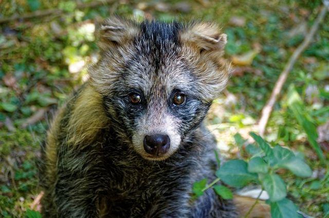 Активисты отпустили животное в лес.