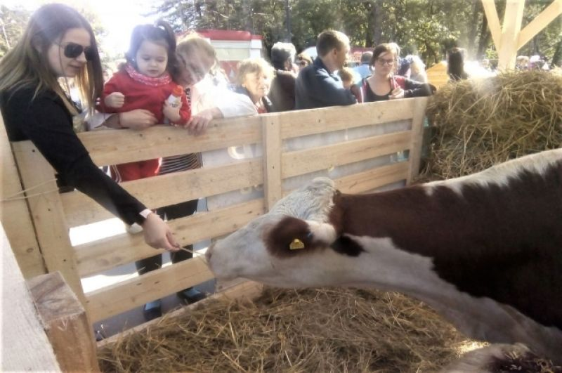 «Ферма», где можно посмотреть на сельскохозяйственных животных.
