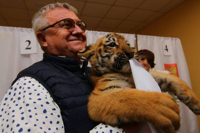 Сергей Писарев с тигрятами