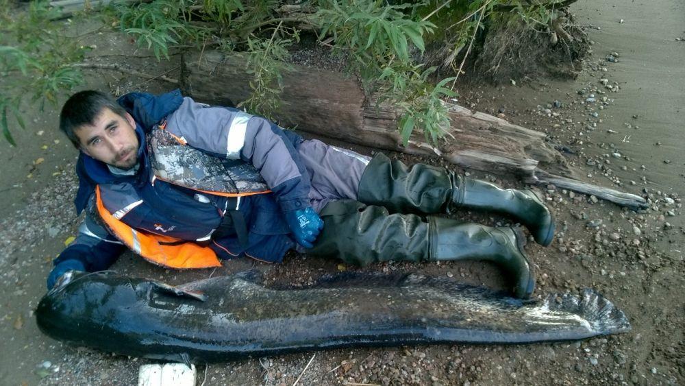 10. Мухачев Антон Игоревич. Сом на 40 кг был пойман 1 сентября 2018 г. На Каме Оханского района.