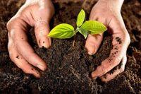 В Херсонской области опасные вещества в почве превышают норму в два раза