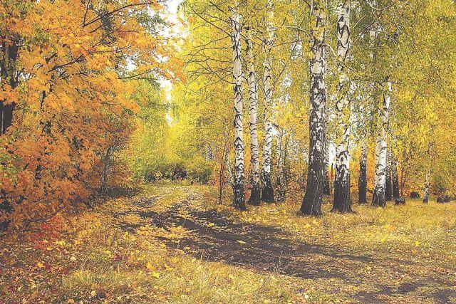 Лес учит человека понимать прекрасное.