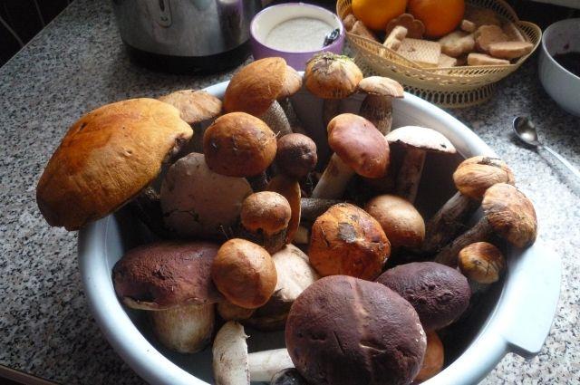 В лесах под Тюменью с начала сезона потерялись десять грибников