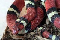 Автор поста не сообщил, где нашёл змею.