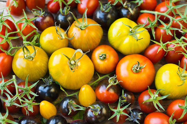 Какие помидоры полезнее — красные, чёрные или зелёные?