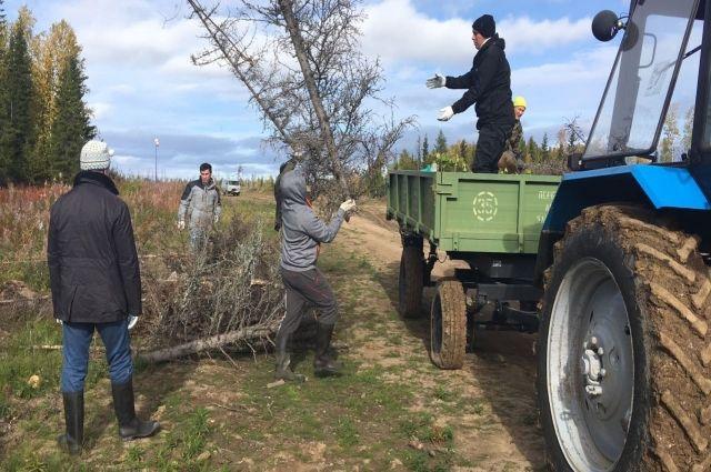 Салехарды навели порядок в лесу близ поселка Пельвож