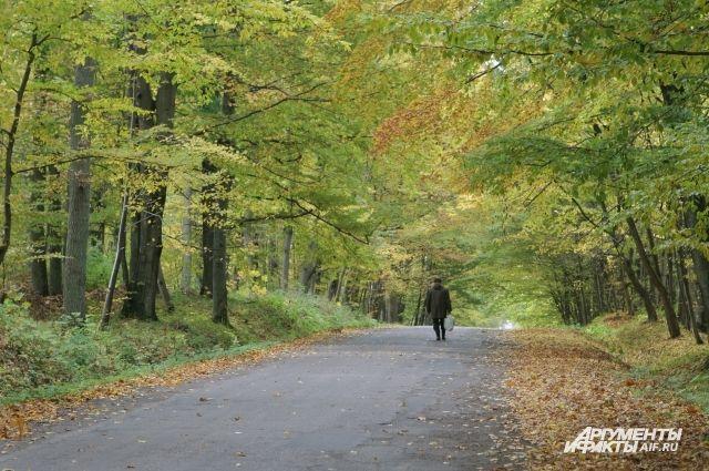 Более 40 человек искали потерявшихся грибников в лесу под Краснознаменском.
