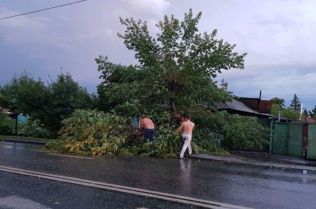 Деревья попадали на припаркованные авто.