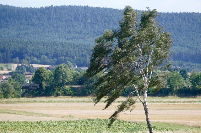 При сильном ветре лучше не выходить на улицу.
