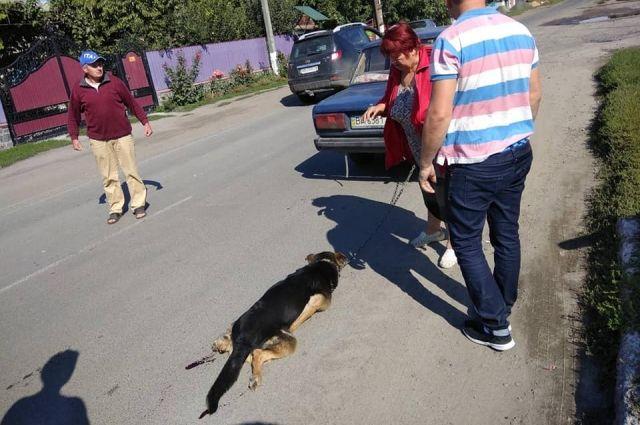 В Винницкой области женщина привязала собаку к авто, чтобы вывезти за город