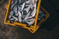 за восемь месяцев 2018 года проверили 118 предприятий, которые занимаются торговлей рыбой. В 15 % от всех проведённых проверок специалисты выявили нарушения законодательства РФ в области защиты прав потребителей и санитарного законодательства.