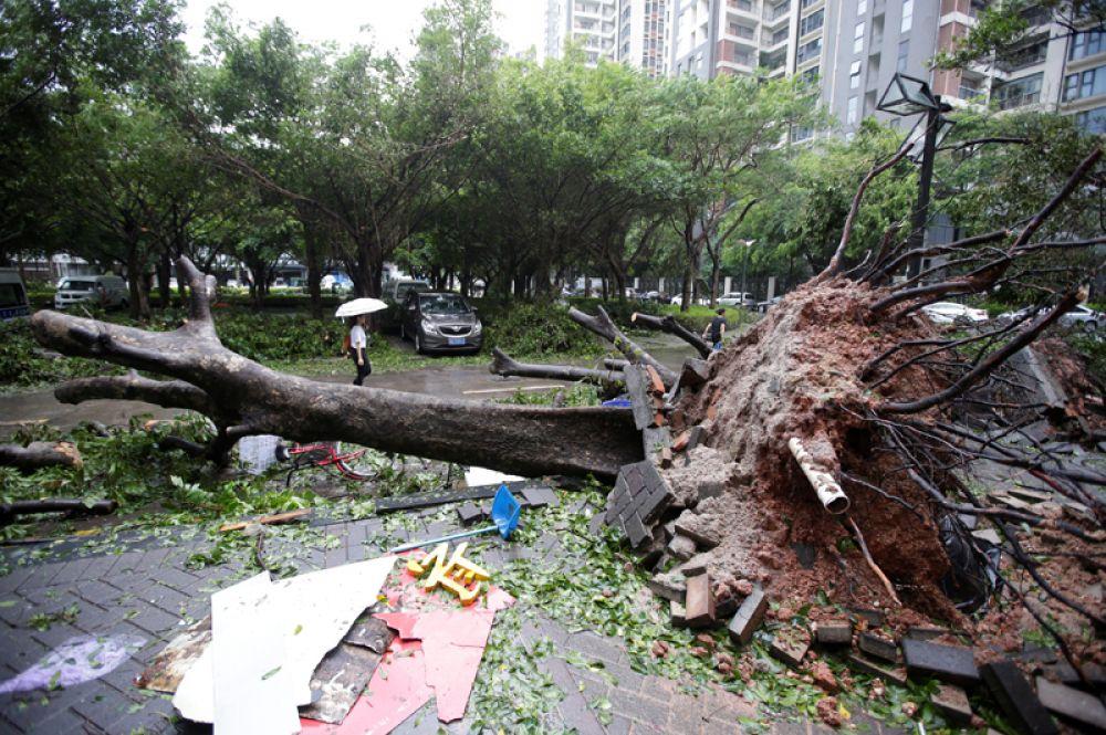 Поваленные деревья на улицах Шэньчжэня.