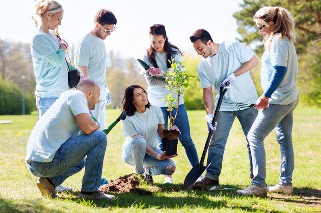 Посади дерево. Ежегодная экологическая акция пройдёт вПодмосковье