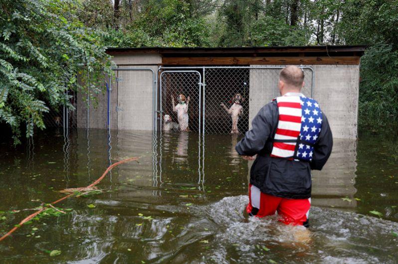 Доброволец Райан Николс спасает собак, оставленных владельцем, покинувшим затопленный район, Леланд, Северная Каролина.