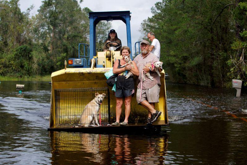 Местные жители эвакуируют домашних питомцев в Бурго, Северная Каролина.