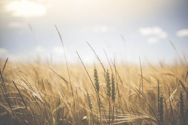 Учхоз первым завершил уборку урожая в Тюменском районе