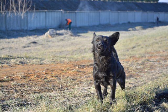 В Сургуте приступили к строительству Центра помощи животным «Переправа».