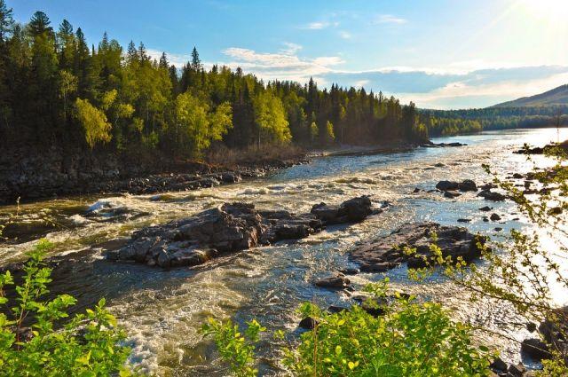 Леса Сибири завораживают своей красотой.