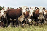 В мае шесть глав крестьянских (фермерских) хозяйств уже прошли конкурсный отбор и получили 45,5млн руб.