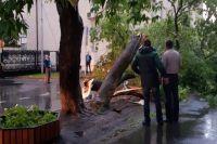 Если дерево упало на улице, то нужно узнать, кто обслуживает эту территорию
