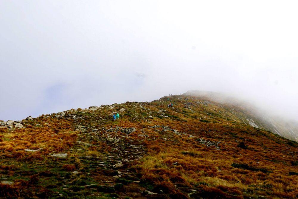 Увидеть цветение рододендрона миртолистого можно на горных склонах массивов Чорногоры, Мармароша и Свидивця, находящихся под охраной Карпатского биосферного заповедника.