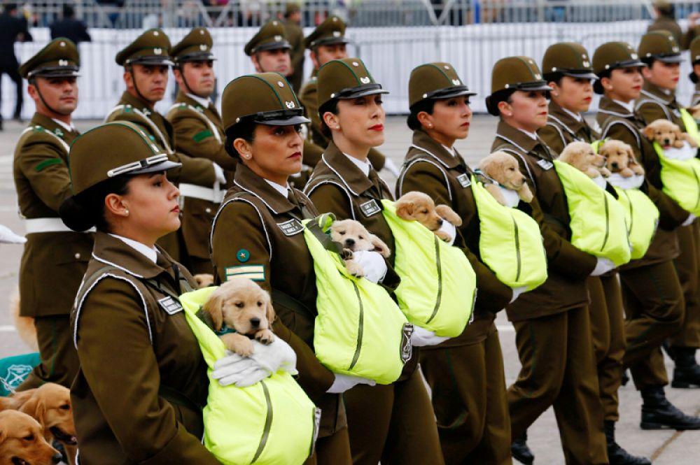 Полицейские с будущими служебными собаками во время ежегодного военного парада в Сантьяго, Чили.