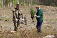 470 тысяч деревьев высадят в Калининградской области осенью.