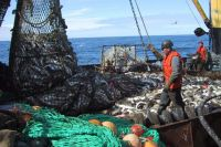 К 2019 году правила рыбалки на Амуре пересмотрят коренным образом, изменив их так, чтобы учесть интересы всех сторон