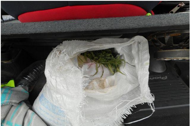 Полиция задержала жителя Ишима, выращивавшего коноплю в теплице