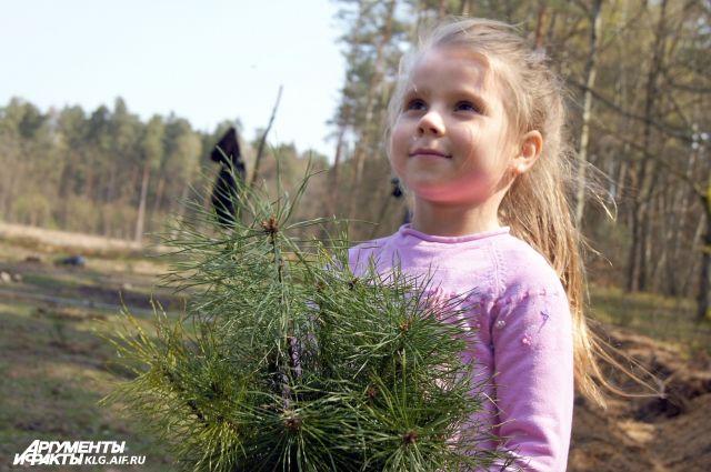 Минстрою РФ проведет пилотный проект по современному озеленению в регионе.