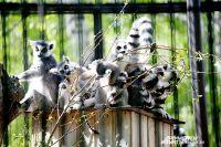 Почти месяц вход в зоопарк для пенсионеров будет бесплатным.