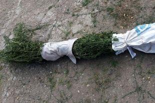 Растения изъяты полицией.