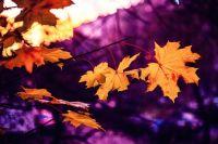 Сентябрьское равноденствие - это период, когда Солнце пересекает небесный экватор, направляясь на юг.