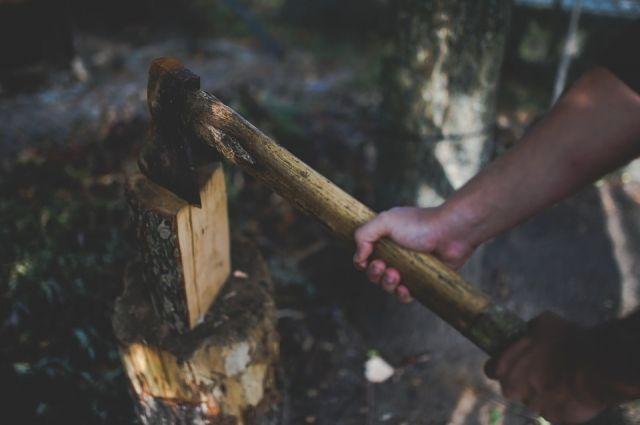 В Тюменской области «черные лесорубы» причинили ущерб на 35 млн рублей