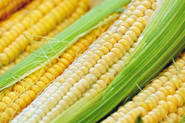 Калининградская область занимает первое место по урожайности кукурузы.