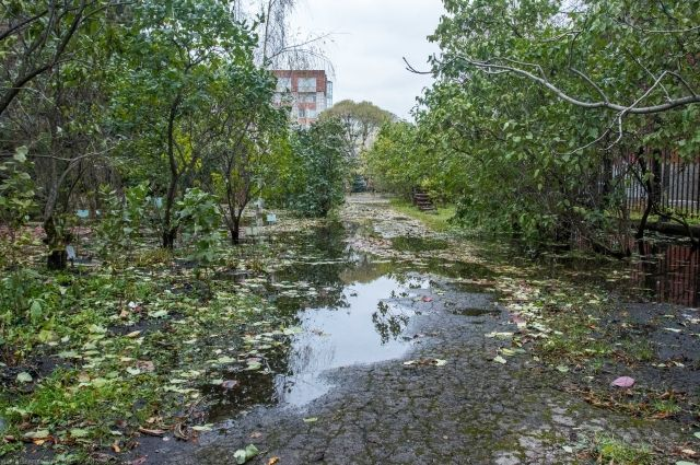 Сад получил саженцы и семена большинства погибших растений из 20 точек мира. Из 150 видов, пострадавших в результате аварии на водопроводе, высадили 132 наименования.