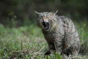 С начала года от укусов животных пострадала 1517 калининградцев.