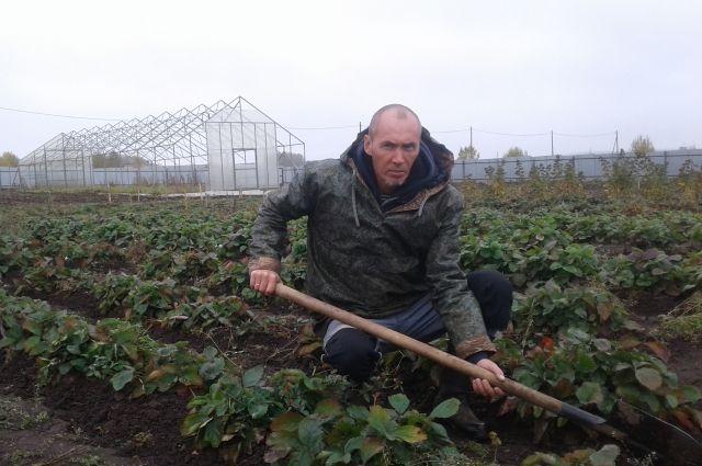 Андрей Чувызгалов выращивает землянику по мировым технологиям.