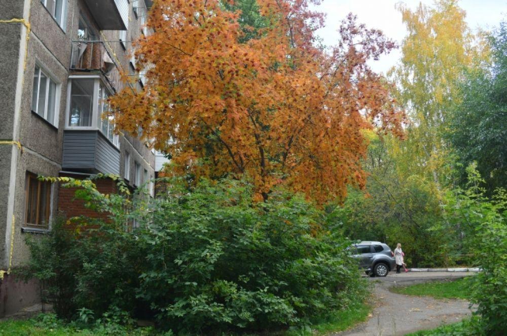 Многие деревья и кусты ещё сохраняют зелёный цвет.