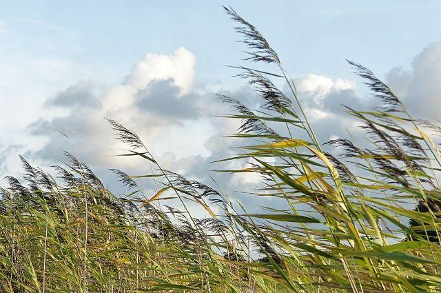 Во второй половине недели ожидается облачная погода, а начиная с четверга - ежедневные дожди. По предварительным прогнозам, особенно сильные осадки возможны в субботу