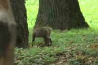В Виннице из зоопарка убежала обезьяна: побег был «спланирован»