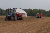 Урожайность картофеля выросла в этом году во многом благодаря хорошей погоде.