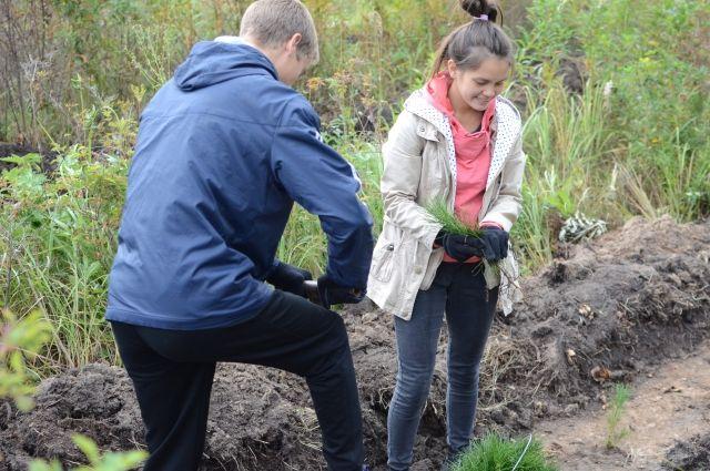 Первокурсники факультета экологии ЧелГУ откликнулись на призыв посадить деревья.