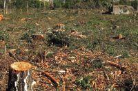 Сколько на самом деле срубят зелёных насаждений, до сих пор неясно.
